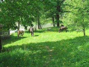 Rautamakasiinin hevoset 2016, E. Harö