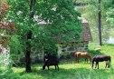 Rautamakasiinin hevoset 2016 E. Harö